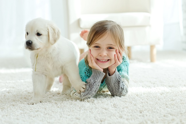 Why You Need A Professional For Pet Stain Cleaning