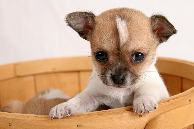 Dealing With Puppy Messes? Professional Pet Stain Cleaning is Essential